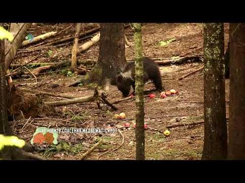 У медведицы из Коми Пужы появился сосед