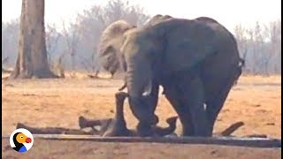 Watch elephants rescue a baby elephant that got trapped in a water trough: