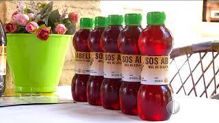 Ufersa possui projeto para retirada de enxames de abelhas em Mossoró, RN