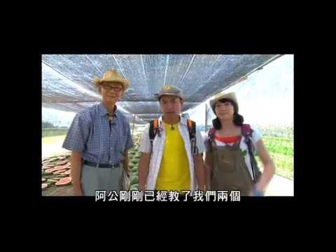 【L6田裡的魔法師】好吃的西瓜怎麼來的呢? 台灣西瓜育種世界NO.1   西瓜大王陳文郁阿公無籽西瓜育種有撇步