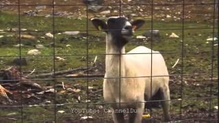 Rob Base and DJ EZ Rock - It Takes Two (Goat Version) Original