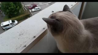 Cat vs fly - worst hunter ever - fail