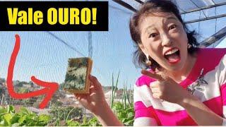 ?NUNCA MAIS JOGUE FORA!! Esponja usada na horta é OURO PURO!!! ?