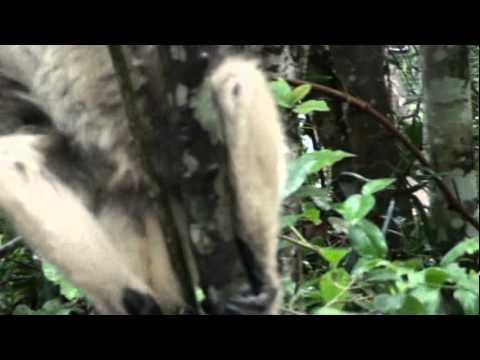 South Africa – Part 19 – Monkeyland – Plettenberg Bay