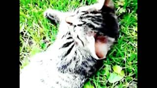 kici kici miał cat