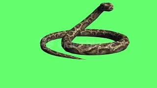 Full green screen snake