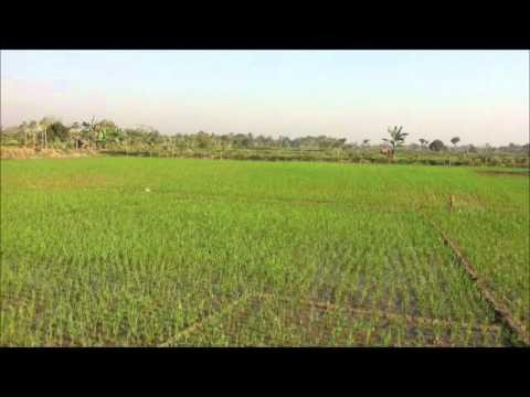 Rural Khulna