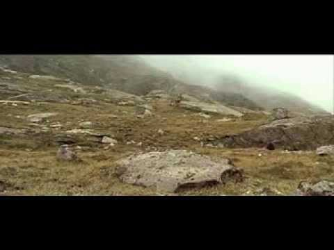 熊 美洲獅現場 - YouTube