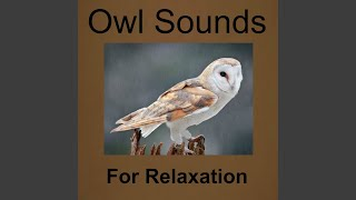 Owl and Frog Sounds
