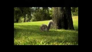 Nestle Kit Kat India  Squirrel TVC