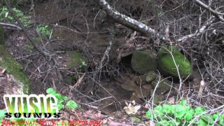 Nature Sounds: Castle Rock County Park  - Sheer Cliff water stream