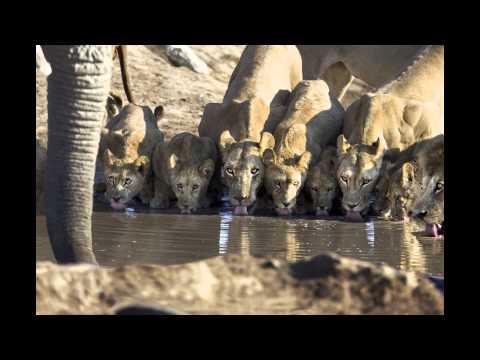 Living Africa – Live