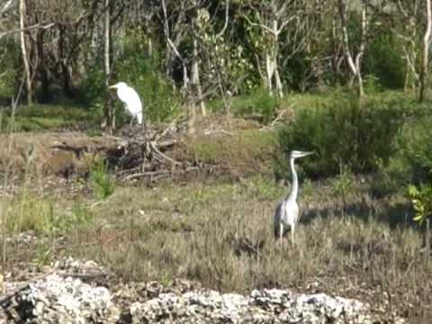 Rejs po lagunie w St. Lucia 2/10