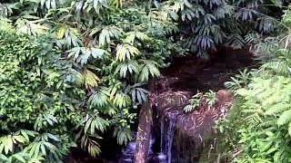 A quick Hawaiian interlude