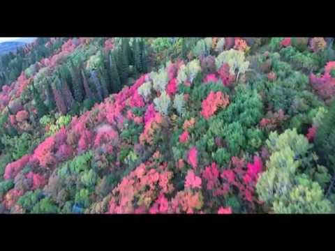North Fork Fall Colors by Drone