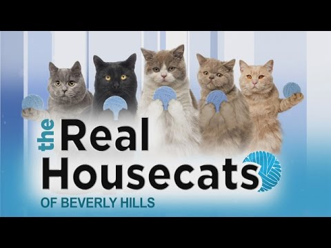 'The Real Housecats of Beverly Hills'