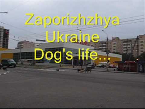 07 09 2010 Zaporizhzhya Ukraine.Dog's life