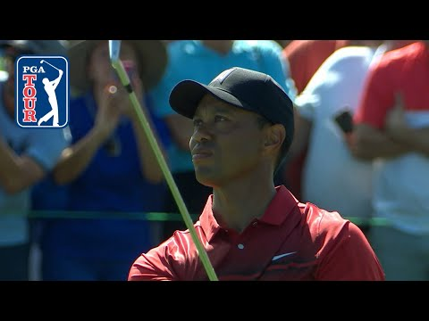 Tiger Woods hits goose with drive and makes birdie