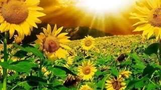 Jó reggelt! Legyen szép napod!