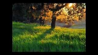 Gavin's Song - Scott Hoying ( Marc Broussard Cover)