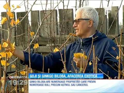 Tot mai mulţi români investesc în afacerile cu arbori exotici