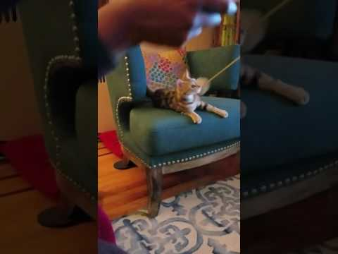 Adopt Mimi on Adopt-a-Pet.com