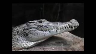 Schnappi das kleine Krokodil - 187 Edition