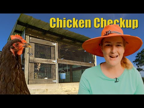 5 Chicken Coop Problems I fix in ONE DAY - Chicken Checkup 102 - Maria