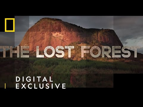 The Lost Forest   Nobel Peace Prize Shorts   National Geographic Nordic