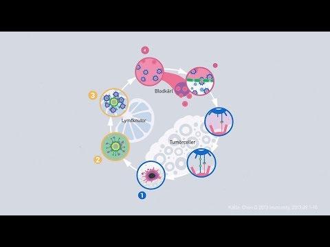En beskrivning av hur immunförsvaret bekämpar cancer