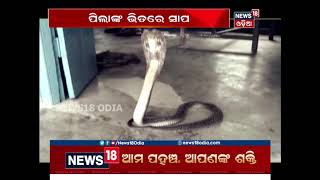 Cobra Found in West Bengal School | News18 Odia