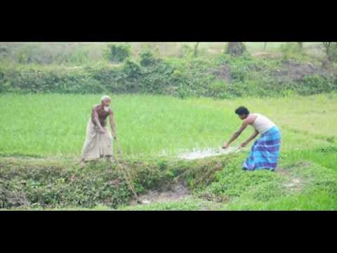 Bangladesh Rice Fields.mov