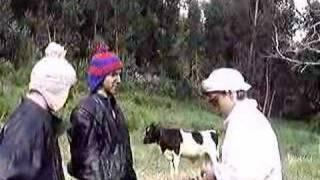 4Litro - Doença das vacas loucas