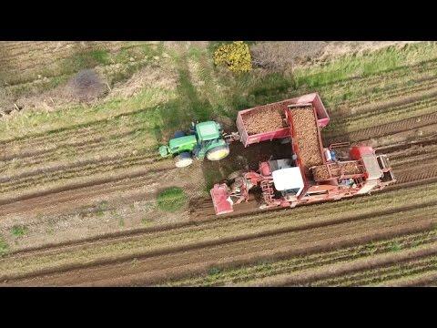 Mash Direct - Carrot Harvesting