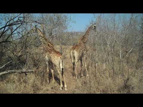 Michelle visits Kruger Park, South Africa – Day 2