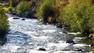 """""""SIERRA AUTUMN"""" - Relax To The Natural Sounds Of A Mountain Stream in Autumn"""