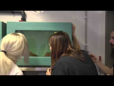Hitta Nemo - premiär för museets nya akvarie