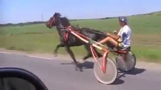 Horse ride faster than car