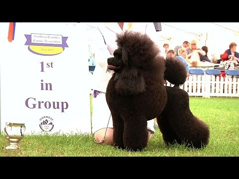 Southern Counties Dog Show 2017 - Utility group Highlights