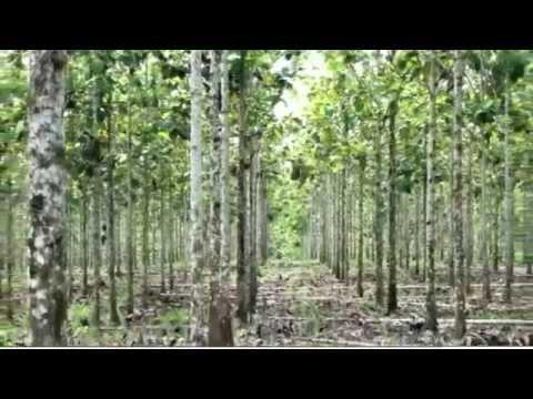 Teakinvestments von Life Forestry überzeugen unterschiedlichste Anleger.