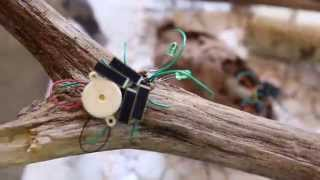 Ars Electronica 2015 Vivarium for Solar Insects (Campus Exhibition: Université Paris 8)