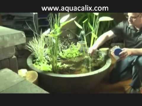 mini calix , mini gölet bitkili ve balıklı dekor ,veranda havuzu.