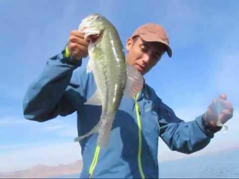 Black Bass Maroc http://www.facebook.com/ahmedmahi1