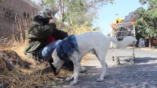 Piter Ponx - Un Perro Hambriento (Video Oficial)