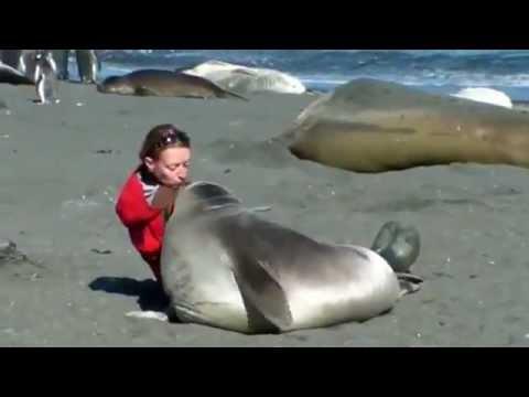 Fok Balığının Sevgi Gösterisi