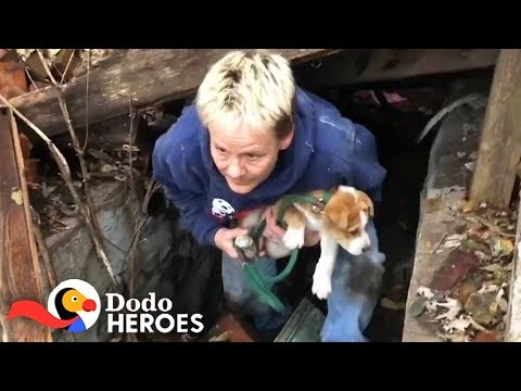 Heroes Risk Their Lives To Save Man's Best Friend | The Dodo