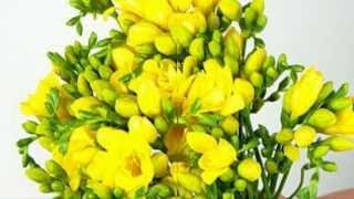Floriile - Anastasia Lazariuc