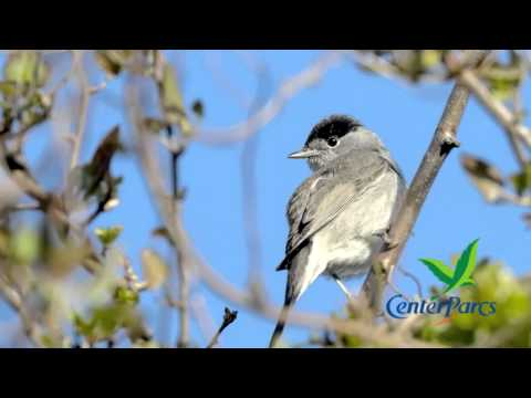 Live bird song from Center Parcs UK - number 5