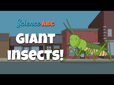 Are Giant Insects Larger Than Humans Possible?