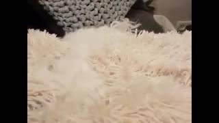 Bom dia (versão cachorrinho ) música HELLO